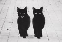 Cat Stuff / by Jeffry Manion