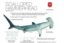 Sharks Infographics / by Visual Loop