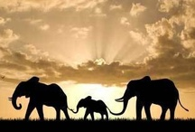 I love elephants / by Ellie Angulo