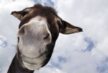 ~*~For The Love Of Donkeys~*~ /    <3  ~DONKEYS~ <3
