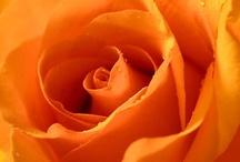 orange / by Yuko Fukuta