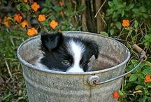 ~Buckets of Love~ / by Clementine