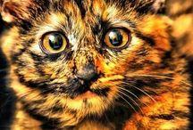 Cutest Animals! / by Christina Vedda