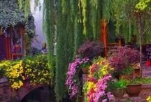 gardens / by Diana Rhoads