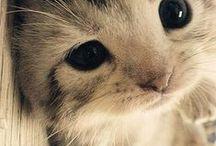 Fuzzy Wuzzys- Cute Animals / I LOVE animals! <3 / by Rockin Mom