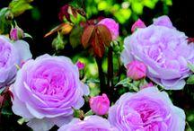 Garden / by Somerset Life