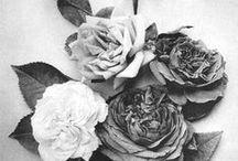 Black & White / by Rosanna Inc.