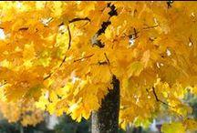 ◆◇◆ Fall ◆◇◆  / by Knit Spirit