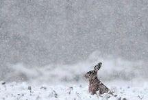 ◆◇◆ Winter ◆◇◆ / by Knit Spirit