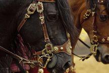 !!Horses!! / by Michelle Evans