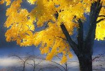 Fall Foliage  / by Jacqueline Roth