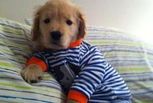 aww! too cute / by August S