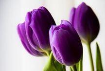 Nature, fleurs, jardins, maisons, terrasses  / la nature enchanteresse au fil des saisons, des moments, des lieux, des maisons, des jardins  / by Martine L