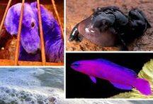Les plus belles photos d'animaux, insectes, petites bébêtes !! / by Martine L