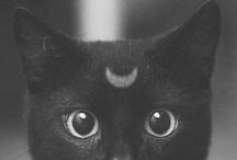 Cats / by Tamara Castro