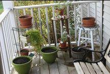 My Garden / by Shannon Seibel