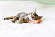 Cute Aminals / Yep, it's mostly cats. / by Sheena Basnett
