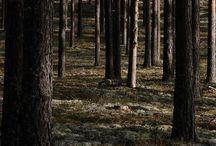 Darkly / by Sonja Nelson
