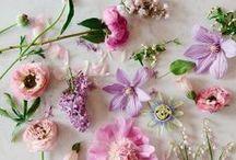 Les fleurs / by Allison Baddley