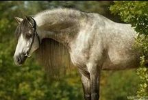 HORSE, chevalerie (FR) el caballo (SP) cavallo (IT) capallo (Gaelic) / by Janice Swann