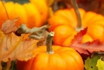 Autumn / I love Fall.......just a little of everything. / by Shelley Bannon