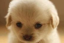 Puppy Love / by Apt2B