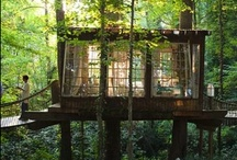 Into the wild / by The 99th studio