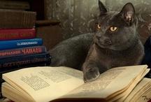 Cats... / by Lori Mason