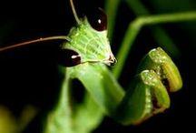Don't bug me / by Lori Mason