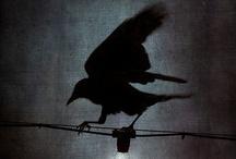 Nevermore / by Lori Mason