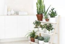 Green Thumbs  / by Hello Polly