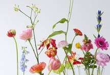 horticulture / by Love It Love It Love It (Ruth)