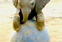 ELEPHANTS / by Maura Fashjian
