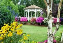 Garden / by Sandra Fernandez