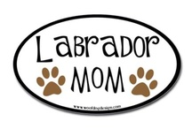 Lab Love and Pet Items / by Billie Jo Harville
