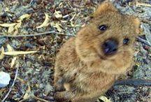 It's so fluffy I'm gonna die! / by Sara Lancaster