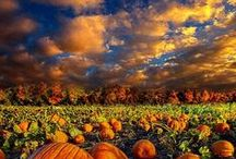 Autumn Days & Gratitude / by Jo Escher