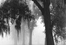 Southern History & Plantation Homes / by Jo Escher