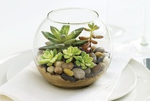 DIY/Succulents / by New Nostalgia | Amy Bowman