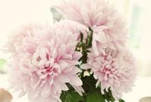Pretty in pink / by Cynthia Pronovost