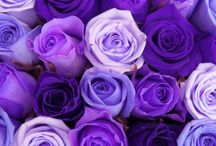 Oh How I Love Purple / by Lorie Dunlap
