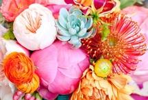 Flowers / by Clara Whitaker