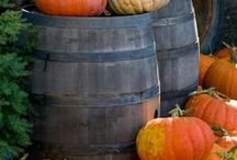 Everything Pumpkin / by Debbie Thompson
