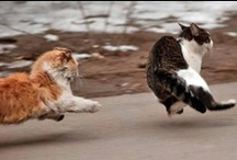 Cat Herd / by Chilly Chick