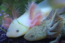 Fish and water dwellers / Fish, underwater creatures, aquariums, aquascaping / by Adria