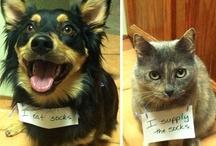 Dog Shaming / Dog shaming and other shameful dog acts :3 / by Panda