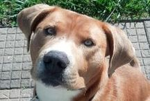 Looking for furever home in Indy / by Cheri Foley