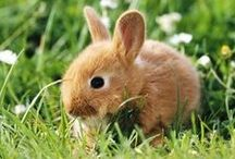 • в υ и и у • / The cuties animals EVER! / by Jessica