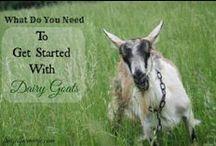 Farm Life/Animals / by Elise @frugalfarmwife.com