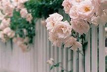Gardening: Cottage Style / by CynthiaJeff Bartyn